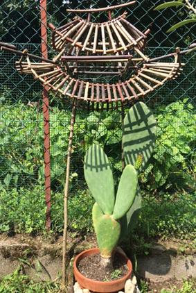 pagoda cactus 001