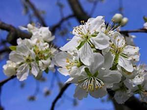 alberi e fiori