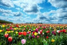 La Primavera e i fiori
